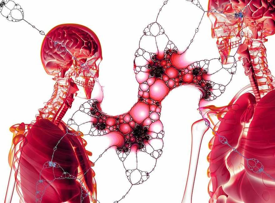 Oberfläche und Anordnung der Epithelzellen
