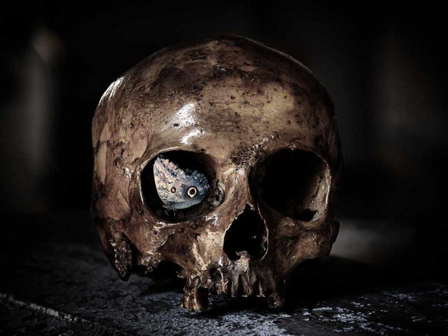 Schädel (Cranium) - Anatomie, Funktion der Schädel