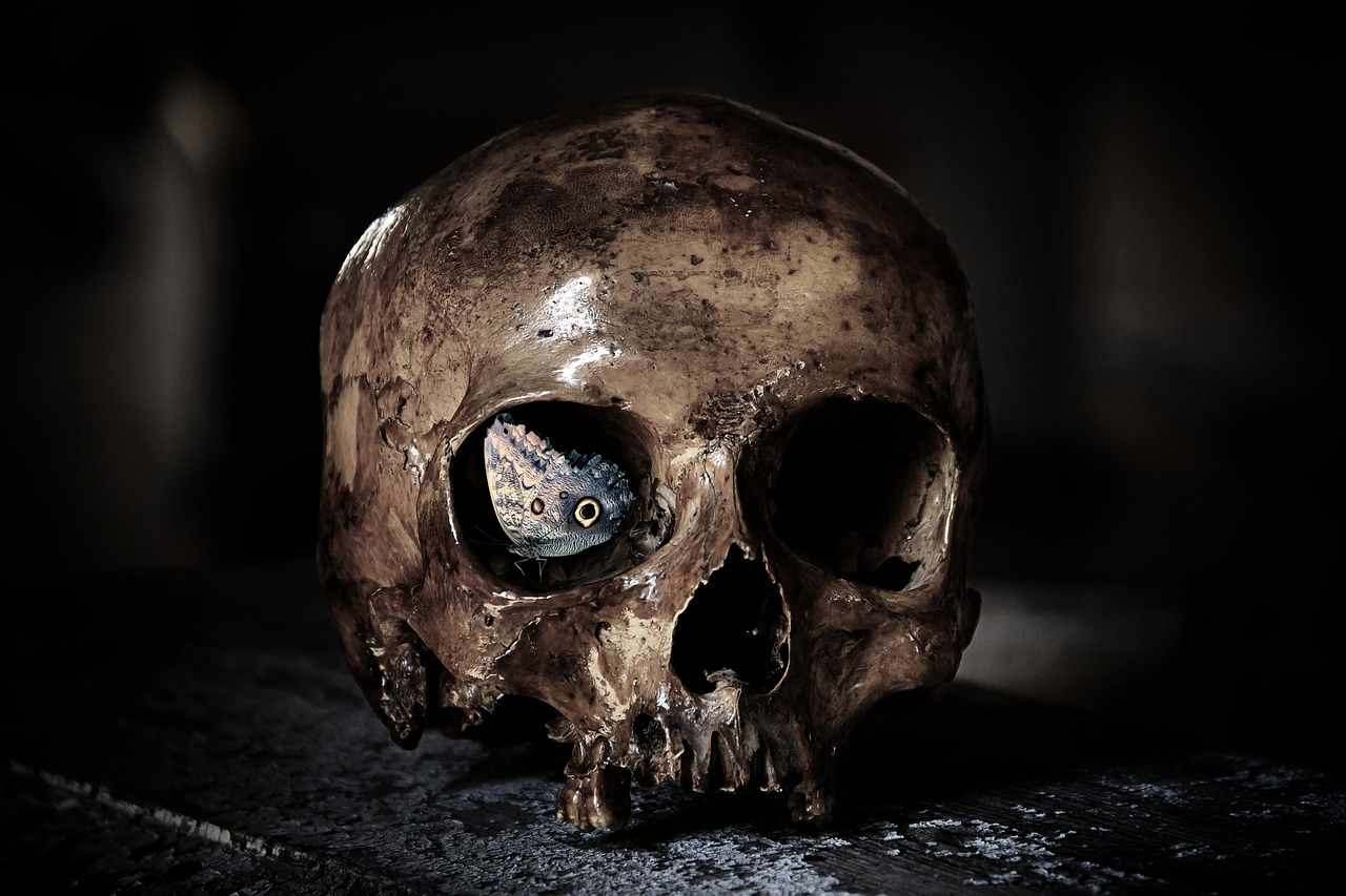 Platte Knochen (Ossa plana)