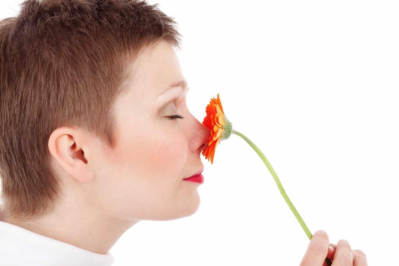 Das Geruchsorgan