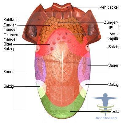 Der-Zunge