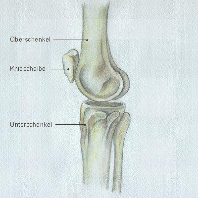 Das kniegelenk - Funktion und Anatomie des Kniegelenks Mensch