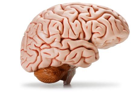 Hypothalamus - Funktion, Anatomie | Der Mensch