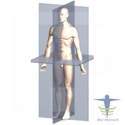 Bewegungssystem
