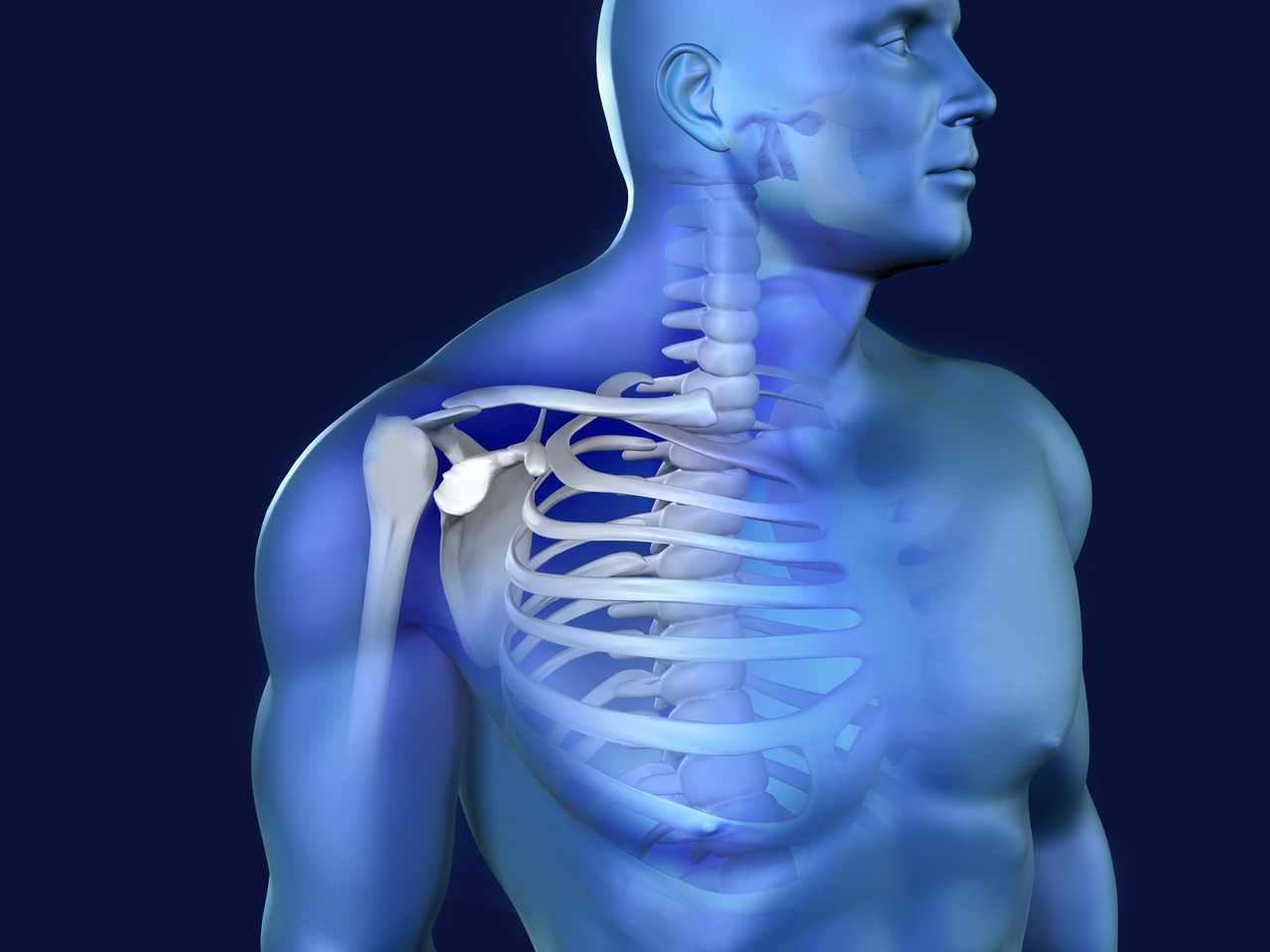 Das schultergelenk - Anatomie, Aufbau und Funktion | Der Mensch