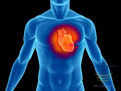 Das Herzmuskel (Myocard)