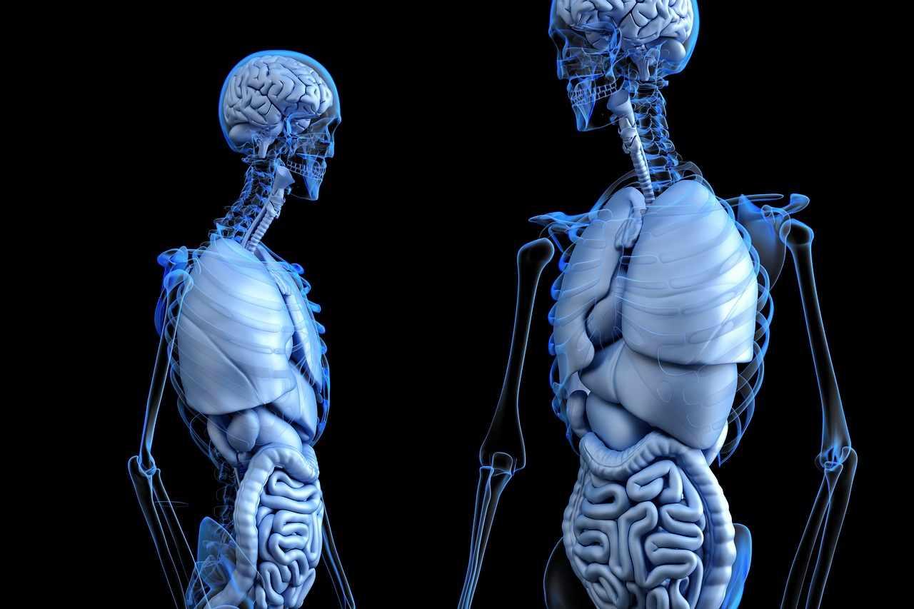 Endokrines Gewebe | Der Mensch