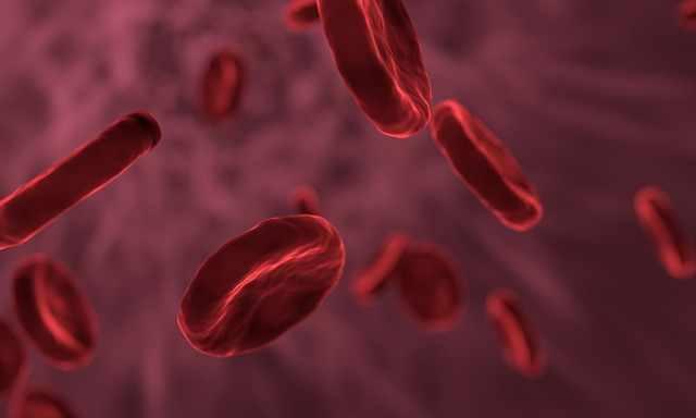 Bildung und Funktion der roten Blutkörperchen (Erythrocyten)