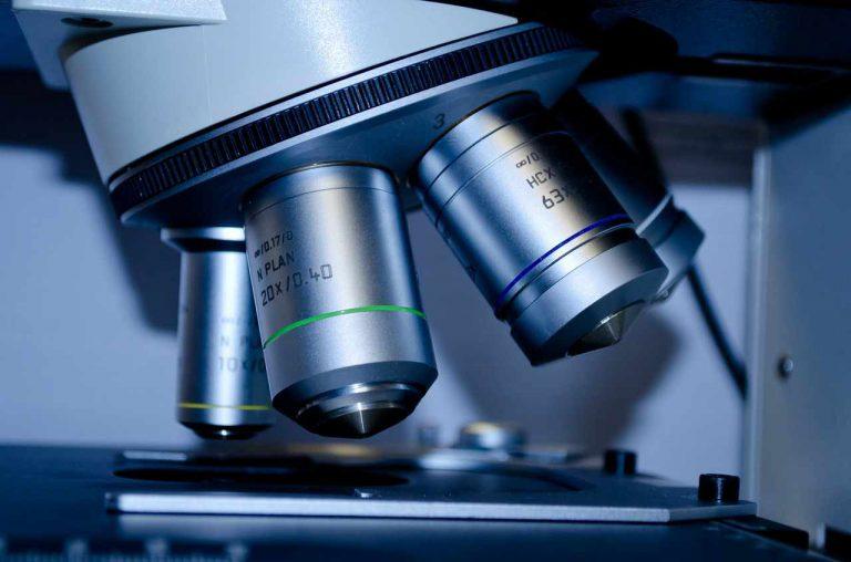 Nervenstützgewebe – Mikroskopischen Anatomie