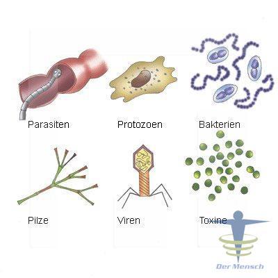 Mikroorganismen Im Körper