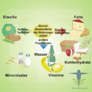 Nahrungsgrundbestandteile