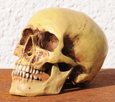 Gesichtsschädel Allgemein (Viscerocranium)